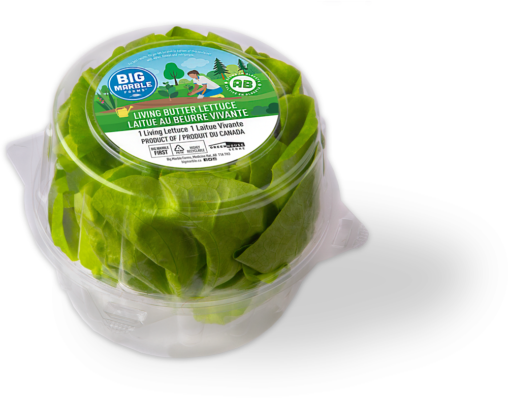 Butter Lettuce in clamshell package